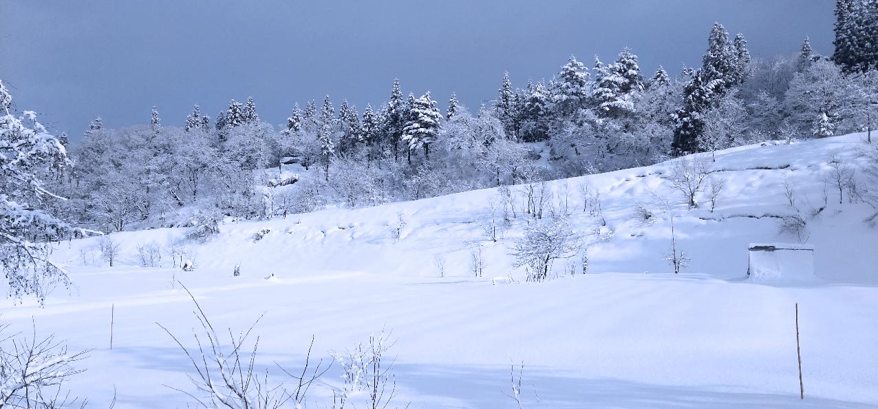 雪ふる里物語の写真